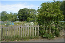 SP4809 : Allotments, Godstow Rd by N Chadwick