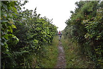 SX4850 : South West Coast path by N Chadwick