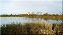 SJ6675 : Northwich Community Woodlands - Neumann's Flash by Colin Park