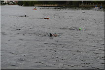 SU8485 : Openwater swimmers, River Thames by N Chadwick
