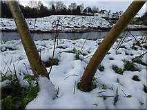 H4772 : Snow along the Camowen River by Kenneth  Allen