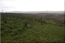 NO0407 : Young trees, Coalcraigy Hill by Richard Webb