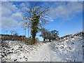 SJ9403 : Old Hampton Lane in the snow by John M