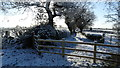 SJ7860 : Snowy track leading S to Dean Hill near Hassall Green by Colin Park