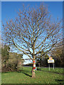SP8309 : Yarn Bombed Tree beside Risborough Road by Des Blenkinsopp