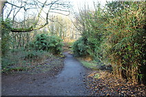 NS2209 : Woodland Path at Culzean Country Park by Billy McCrorie