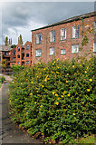 SX9291 : The Mill and Pitts Court by Ian Capper