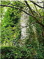 SO6184 : Ruined remains of the 12th century Church of St Laurence by Richard Law