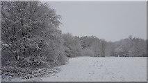 TQ2996 : Snow in Trent Park by Christine Matthews