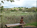 SX8772 : Hackney Marshes, Newton Abbot by Chris Allen