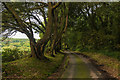 SW7124 : Ilex Avenue by Ian Capper