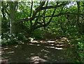NZ4345 : Path through the Blue House Plantation by Mat Fascione