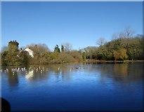 TQ2255 : Mere Pond, Walton on the Hill - frozen over by Stefan Czapski