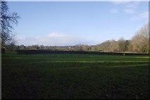 SJ4112 : Field, Shoot Hill by Richard Webb