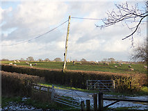 SJ6367 : Sheep in a field east of Grange Lane by Stephen Craven