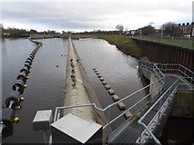 SX9291 : Flood relief weir above Trew's Weir, Exeter by Chris Allen
