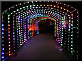 SJ7387 : Christmas at Dunham Massey - Illuminated Tunnel by David Dixon