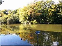 TQ2636 : Pond, Goffs Park, Crawley by Robin Webster
