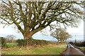 SE2867 : Trees along Whitcliffe Lane by Derek Harper