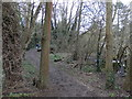 SP3165 : Path by the River Leam, Leamington by Rudi Winter
