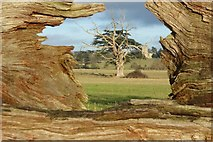 SO8844 : Croome Park framed in a fallen tree trunk by Philip Halling