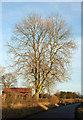SE3266 : Ash by Moor Road by Derek Harper