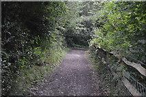 TQ3328 : Footpath by Ardingly Reservoir by N Chadwick