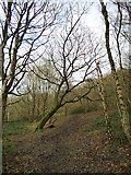 SE2433 : Leaning tree in Post Hill woods by Stephen Craven
