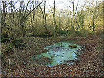 SE2332 : Stagnant pond in Post Hill woods by Stephen Craven