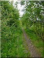 SJ8950 : Disused railway near Milton in Stoke-on-Trent by Roger  Kidd