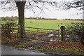 SP1399 : Cows near Roughley by Bill Boaden