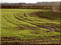 ST6463 : The winter crops are on the way by Neil Owen