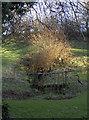 ST6563 : A spring in the garden by Neil Owen