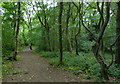 NZ2947 : Path through Cocken Wood by Mat Fascione