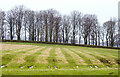 NY6308 : Banded pattern of grass in field by Trevor Littlewood