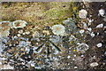 SP4915 : Benchmark on wall of footbridge over River Cherwell by Roger Templeman