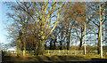 SE4145 : Trees beside junction 45 on the A1(M) by Derek Harper