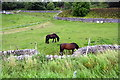 SD7966 : Horses in field between B6480 and Brunton Road by Roger Templeman