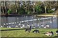 SP0683 : Bird paradise at Cannon Hill Park, Edgbaston, Birmingham by P L Chadwick