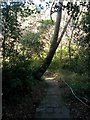 SZ0690 : Branksome: the path heads into the chine from Sandbourne Road by Chris Downer