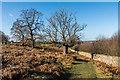 TQ5455 : Knole Park by Ian Capper