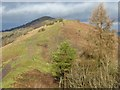 SO7642 : View to Perseverance Hill and the Worcestershire Beacon by Philip Halling