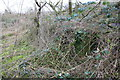 SP4919 : Remains of structure (outflow?) beside Oxford Canal hidden in brambles by Roger Templeman