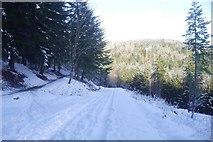 NT2840 : Road up to Buzzards Nest car park, Glentress by Richard Webb