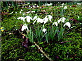 H4572 : Spring flowers, Omagh (2) by Kenneth  Allen