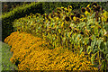 SX0454 : Yellow borders, Eden Project by Ian Capper