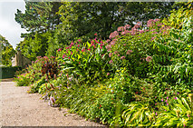 SX4268 : Border, Upper Garden by Ian Capper