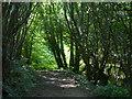 NZ4443 : Path and woodland in Fox Holes Dene by Mat Fascione