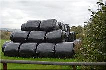 SX4060 : Wrapped bales by N Chadwick