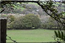 SX4160 : Field near Carkeel by N Chadwick